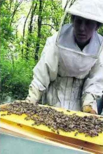 Aujourd'hui, c'est la journée nationale des Compagnons du miel