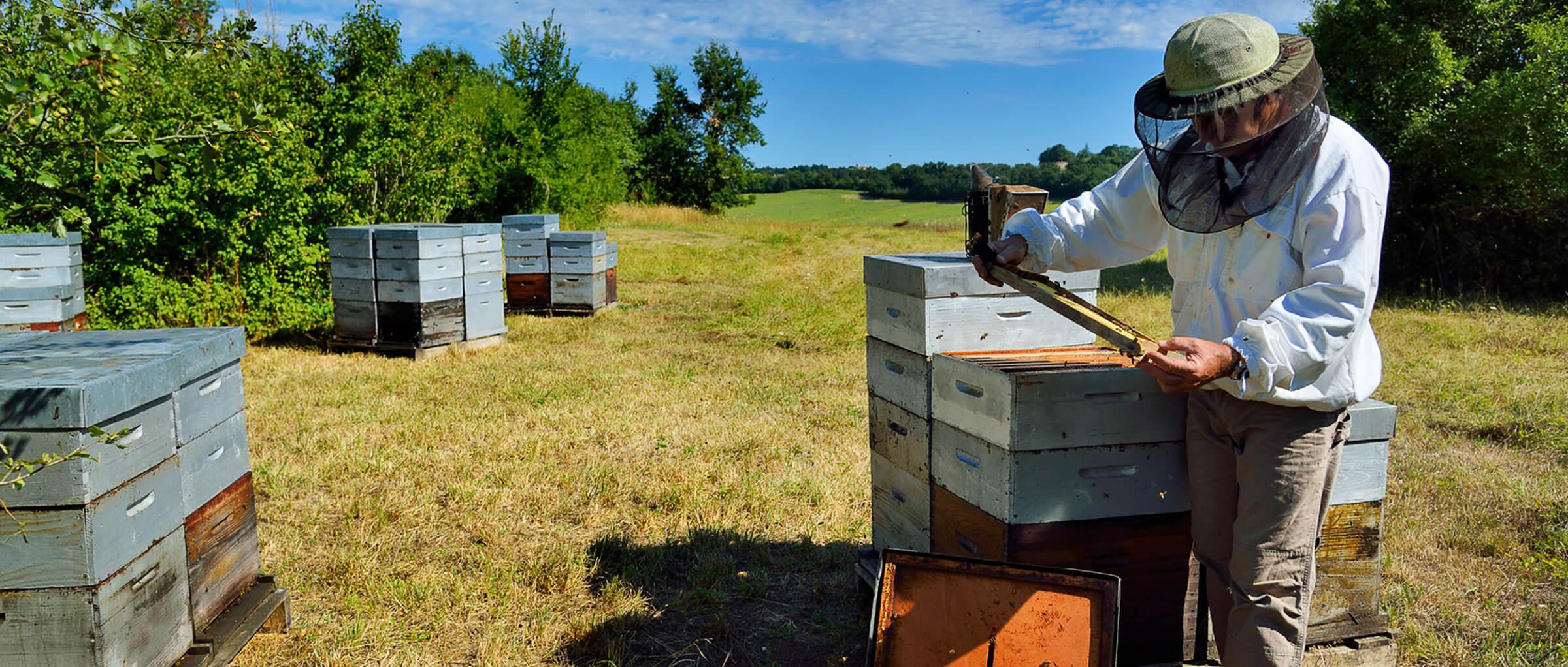 L'apiculteur : un passionné !