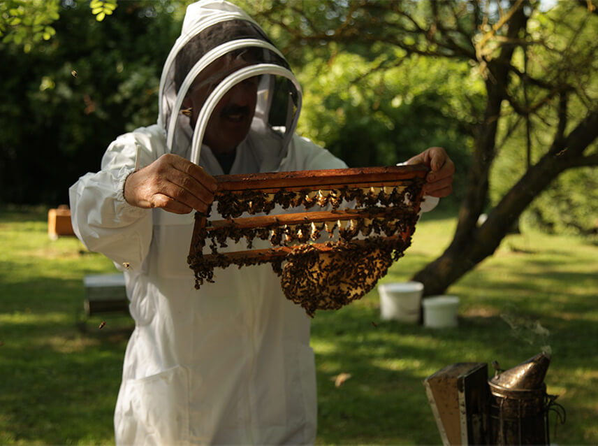 La visite des ruches