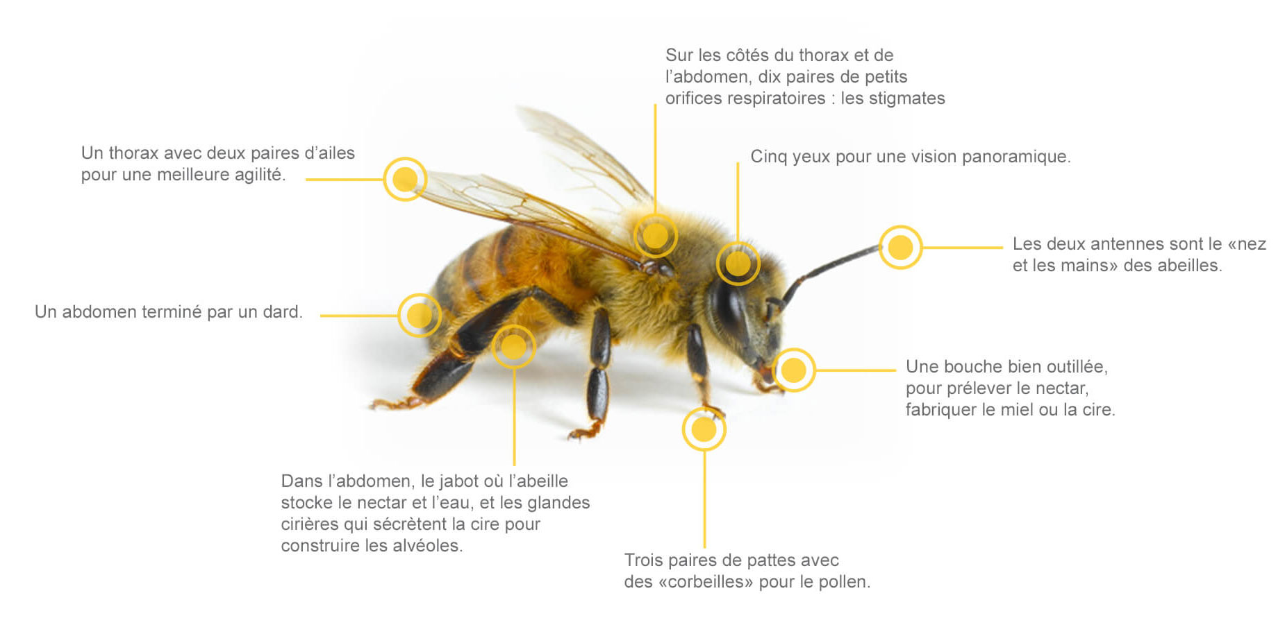 Les habitants de la ruche