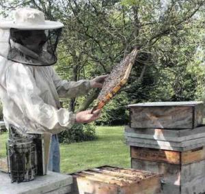 La vie des ruches et des abeilles expliquée sur le terrain par Jacky Cordary (Photo DR)