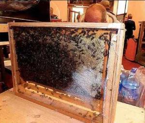 Journée nationale des Compagnons du miel