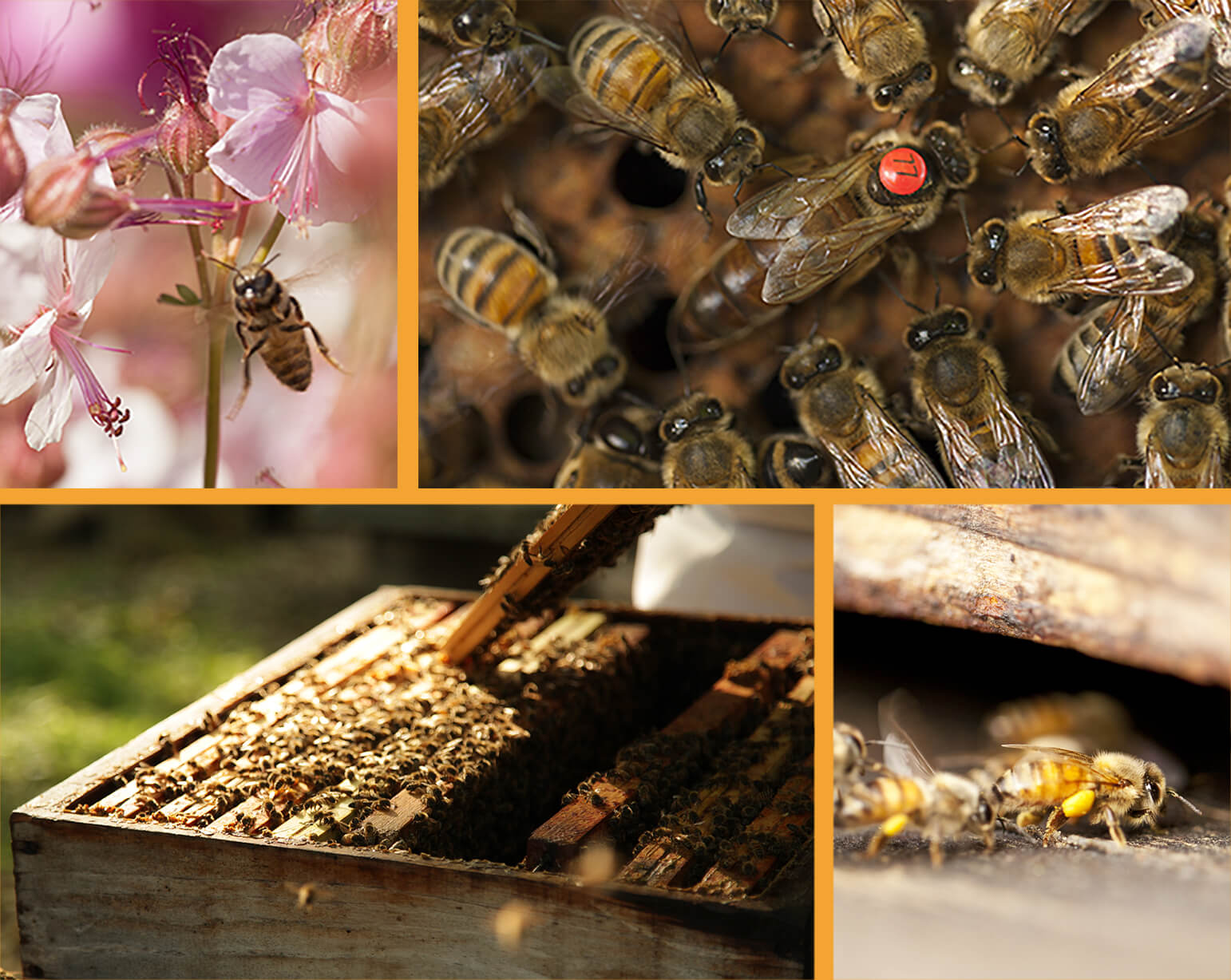 Les abeilles et la nature