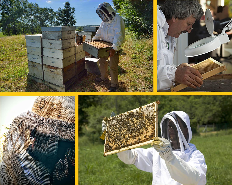 Les apiculteurs