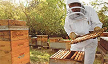 La fête du miel
